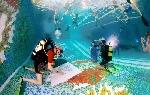 Чемпионат Украины по подводному фотографированию в бассейне. Харьков, 26-27 мая 2009 г.
