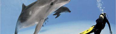 Людина і дельфін
